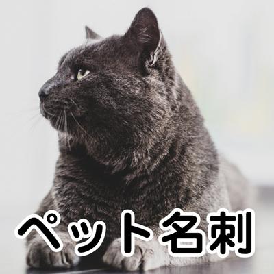 category_pet.jpg
